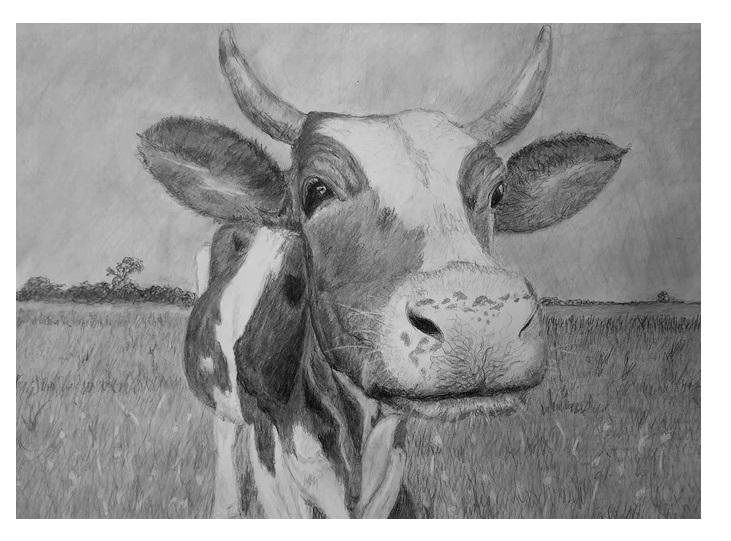 Корова рисунок